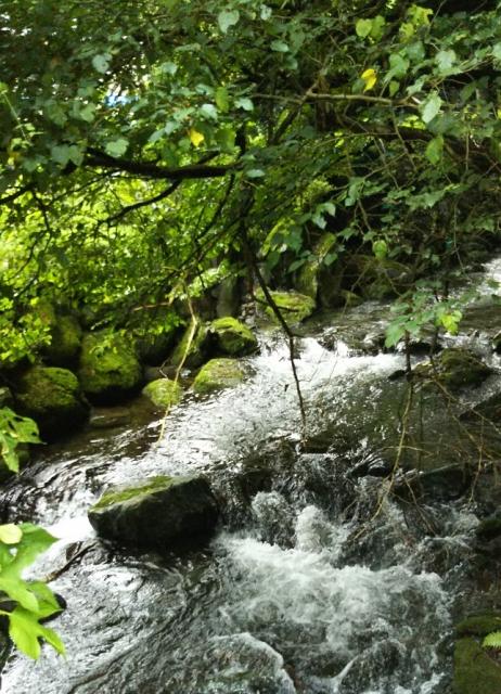 森の奥の川のせせらぎのフリーBGM