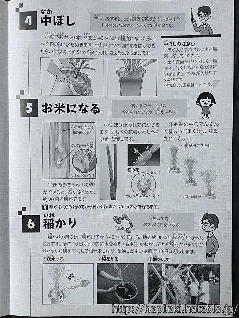 バケツ稲づくりマニュアル3