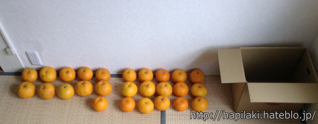 和歌山県産甘夏みかん10kg