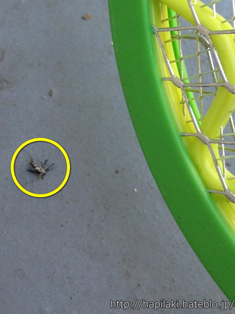 電撃ラケットに引っかかった蚊を地面に落とす