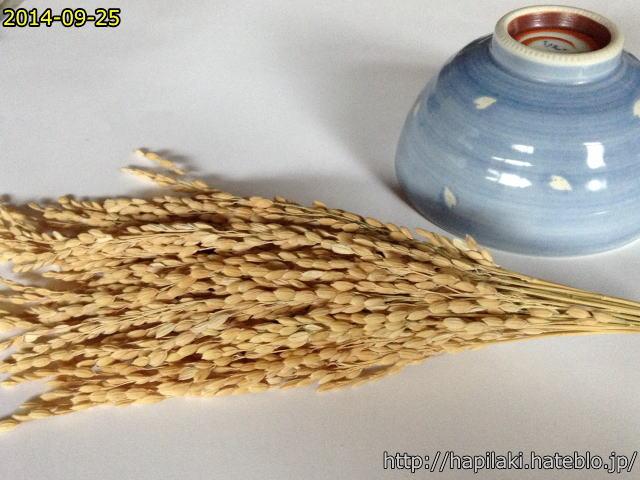 茶碗で脱穀する