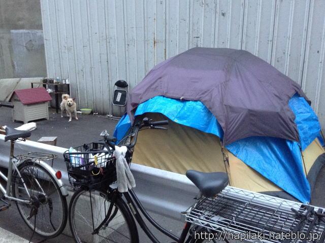あいりん地区職安付近のテントと犬