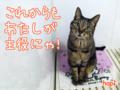 150307-【猫アニメ】祝!10周年にゃ!