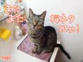 【猫アニメ】真っ赤にゃ桜にゃ〜!?