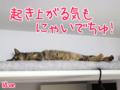 【猫アニメ】はっぴぃ♪ばーすでーにゃ!-2015