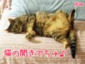 【猫アニメ】中秋の名月にゃ!