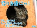 [ねこ][多頭飼][里親募集][アニメ]【猫アニメ】仲良し?女子チームにゃ!?