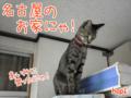 [ねこ][多頭飼][里親募集][アニメ]【猫アニメ】行き先はどこにゃ?!
