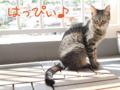 [ねこ][多頭飼][里親募集][アニメ]20150913-【猫アニメ】初猫カフェにゃ!