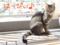 20150913-【猫アニメ】初猫カフェにゃ!