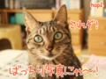 ★重要★【猫アニメ】締切迫る!はぴ♪らぶ*フレンズカレンダー2016