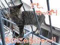[ねこ][多頭飼][里親募集][アニメ]20050911【猫アニメ】気ににゃるにゃ!?