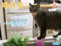 【猫アニメ】現行犯にゃ!