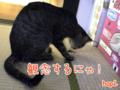 2005/10/14【猫アニメ】不審者にゃ〜!