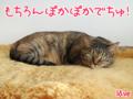 [ねこ][多頭飼][里親募集][アニメ]【猫アニメ】夕暮れ時の過ごし方にゃ!