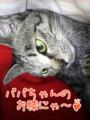 [ねこ][多頭飼][里親募集][アニメ]2005/10/18【猫写真】がんばったにゃ~