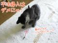 [ねこ][多頭飼][里親募集][アニメ]2005/10/20【猫アニメ】不審者、再び!