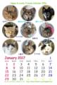 [猫][里親][多頭飼][カレンダー][プレゼント]【猫アニメ】はぴ♪らぶ*フレンズカレンダー2016完成にゃ!