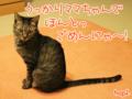[ねこ][多頭飼][里親募集][アニメ]【猫アニメ】ごめんにゃ!(はぴ♪らぶ*フレンズカレンダー訂正のお