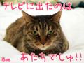 [ねこ][多頭飼][里親募集][アニメ]【猫アニメ】祝!にゃんこの日にゃ♪