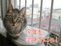 [ねこ][多頭飼][里親募集][アニメ]【猫アニメ】桜と富士山にゃ!