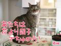 [ねこ][多頭飼][里親募集][アニメ][桜][お花見]【猫アニメ】お花見デザート、ど〜するにゃ!?