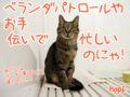 [ねこ][多頭飼][里親募集][アニメ]【猫アニメ】忙しいのにゃ〜!