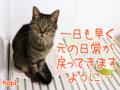 [ねこ][多頭飼][里親募集][アニメ]【熊本地震】レスキュー情報にゃ!