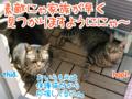 [ねこ][多頭飼][里親募集][アニメ]【猫アニメ】保護猫カフェにゃ!