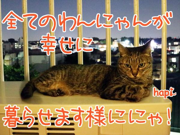 【猫写真】「お星さまにおねがい」にゃ!