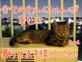[ねこ][多頭飼][里親募集][アニメ]【猫写真】「お星さまにおねがい」にゃ!