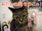160622-【猫アニメ】はっぴぃ♪バースデーにゃ!-2016