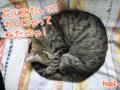 [花火][ねこ][多頭飼][里親募集][アニメ]【猫アニメ】六郷花火大会にゃ!