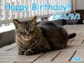 [ねこ][多頭飼][里親募集][アニメ]【猫アニメ】Happy Birthday!にゃのにゃ♪