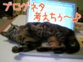 [ねこ][多頭飼][里親募集][アニメ]【復刻版】*【猫アニメ】ブログネタ考えちぅにゃ〜[new]-2006/4/19