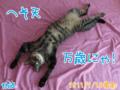 [ねこ][多頭飼][里親募集][アニメ][へそ天]【猫アニメ】へそ天、万歳にゃ!