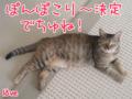 [ねこ][多頭飼][里親募集][アニメ]2009/8/10-2【猫アニメ】台風接近ちぅにゃ?!