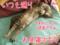 2009/8/10-1【猫アニメ】台風接近ちぅにゃ?!
