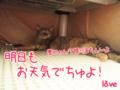[ねこ][多頭飼][里親募集][アニメ][予防接種]【猫アニメ】やられまちた・・・