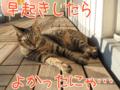 [ねこ][多頭飼][里親募集][アニメ][UFO][富士山]【猫アニメ】UFOにゃ?!