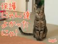 [ねこ][多頭飼][里親募集][アニメ][NHKクローズアップ現代+][どうぶつ基金]【猫アニメ】緊急告知〜どうぶつ基金がNHKクローズアップ現代+で紹介