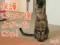 【猫アニメ】緊急告知〜どうぶつ基金がNHKクローズアップ現代+で紹介