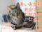【猫アニメ】2016年、ありがとにゃ♪2017年もよろしくにゃ!