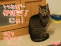 [ねこ][多頭飼][里親募集][アニメ][カレンダー]【猫アニメ】発送完了にゃ!