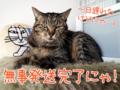 【猫アニメ】第2弾・発送完了にゃ!