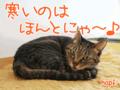 [猫][多頭飼い][里親募集][動物愛護]【猫アニメ】4月の雪にゃ〜