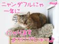 [猫][多頭飼い][里親募集][動物愛護][誕生日]はっぴぃバースデーにゃ!