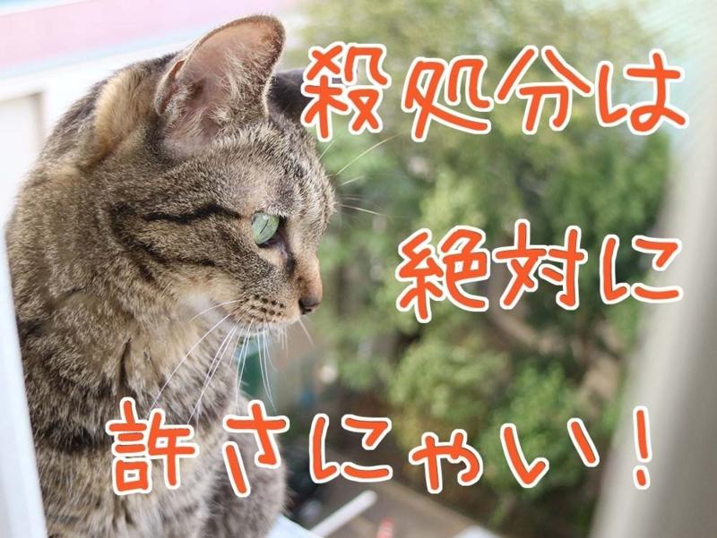【猫写真】殺処分は許さにゃい!
