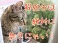 [猫][多頭飼い][里親募集][動物愛護][奄美大島][環境省][殺処分][アマミノクロウサギ]【猫写真】殺処分は許さにゃい!