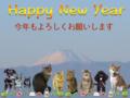 [猫][多頭飼い][里親募集][動物愛護][新年][犬][富士山][青空][ことよろ]【猫写真】あけましておめでとにゃ!